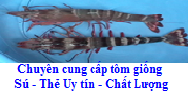 giong tom su the can tho